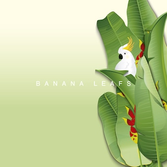 Banana leafs with cockatoo background