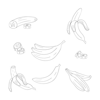 Banana single and bunch outline illustrations set
