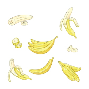 Banana single and bunch set.