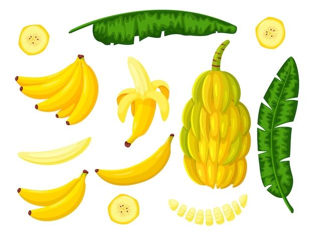 Banana tree tropical fruit set isolated on white