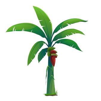 바나나 나무는 많은 제품을 생산하고 있습니다.