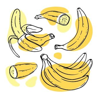 Бананы спелые вкусные тропические фрукты, очищенные по отдельности и в связке в стиле эскиза
