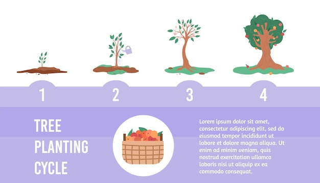 Banner with cycle of growth apple tree from green seedling to plant with fruits