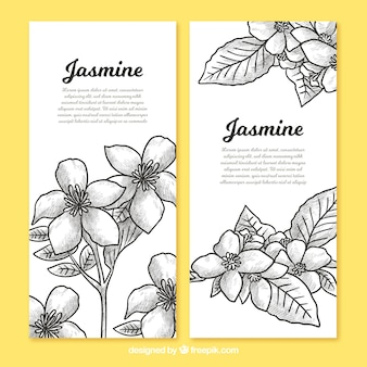 Banners of jasmine sketches