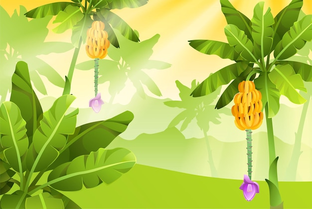 Banners with banana trees.
