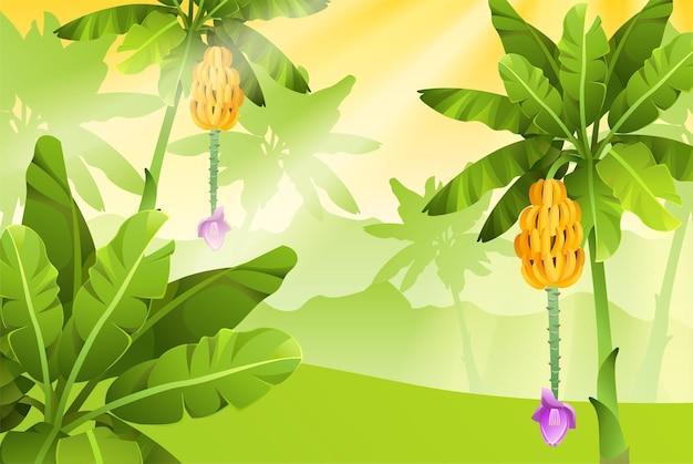 바나나 나무와 배너.