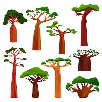 Баобаб или набор обезьяньего хлеба. хлебное дерево обезьяны или древнее растение со стволом и зелеными листьями