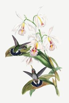 ジョン・グールドとヘンリー・コンスタンティン・リヒターのアートワークからリミックスされた、とげのある鳥のベクトル動物アートプリント