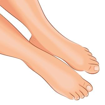 Bare female legs, top view. vector illustration.