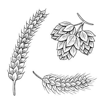 大麦と小麦、麦芽とホップ。オクトーバーフェストのビール。古いスケッチとwebまたはパブメニューのビンテージスタイルで描かれたインクの手で刻まれました。白い背景の上の要素。
