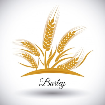 Barley icons
