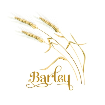 Barley, oat set