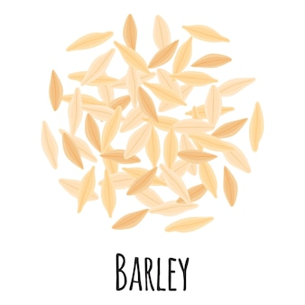 Barley for template farmer market design, label and packing. natural energy protein organic super food. vector cartoon isolated illustration.