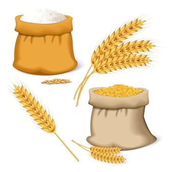 Barley wheat icon set