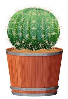 Barrel cactus in una pentola di legno