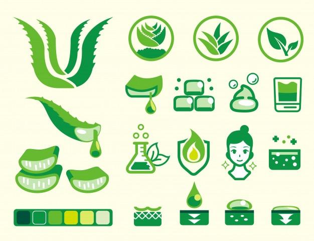 Basic attribute of aloe vera color icon set.