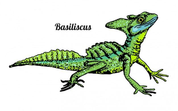 Василиск basiliscus mitratus. ящерица рисованной графический эскиз на белом фоне. рептилии. цветная иллюстрация.