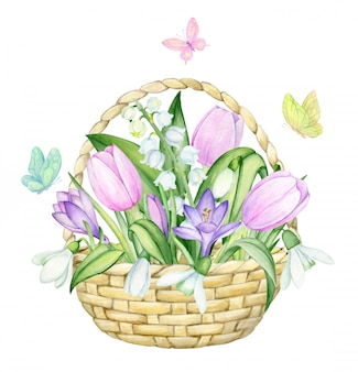 Basket wicker, tulips, crocuses, lilies of the valley, snowdrops, butterflies. watercolor, spring, concert on an isolated background.