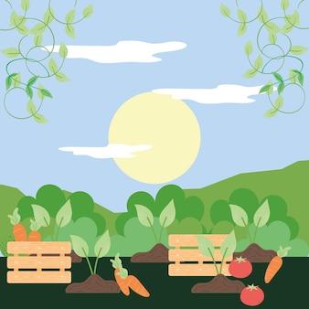 Корзины и свежие овощи