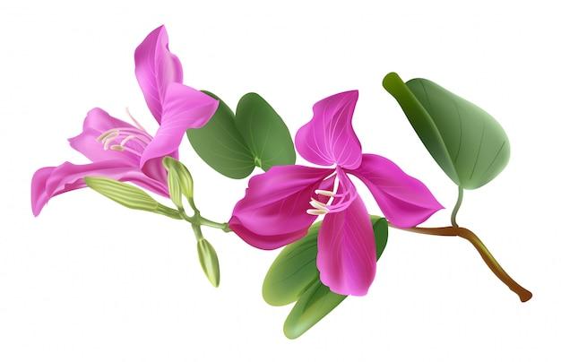 バウヒニア花ベクトルイラスト