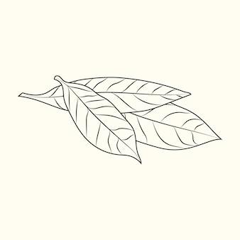베이 잎 스케치 배경에 고립. 식품 성분. 빈티지 새겨진 스타일. 벡터 일러스트 레이 션