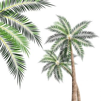 Beach tree palms
