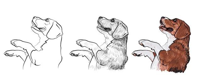ビーグル犬、食べ物を物乞い