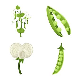 Бин и горох овощной мультфильм значок набор. изолированные иллюстрации горох растений сада. набор иконок из бобовых овощей.