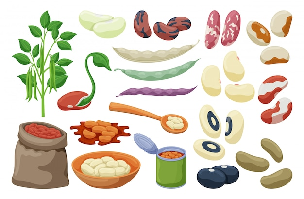 Bean of food set