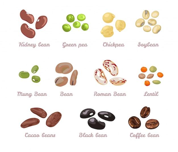 콩과 콩과 식물 벡터 세트. 프리미엄 벡터