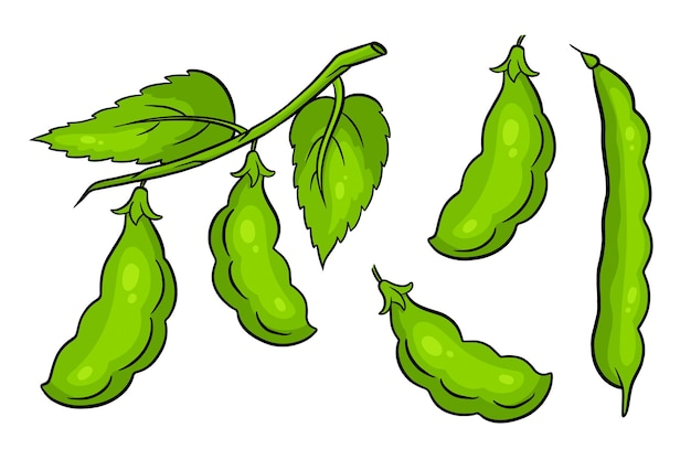 Beans set. fresh green beans. in a cartoon style. vector illustration for design and decoration.