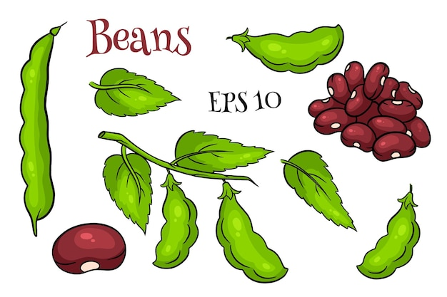 Beans set. fresh green beans and red beans. in a cartoon style. vector illustration for design and decoration.