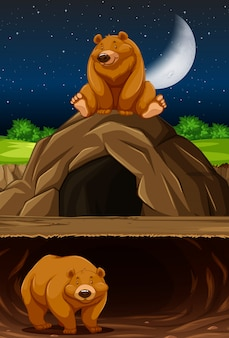 Bear at the cave