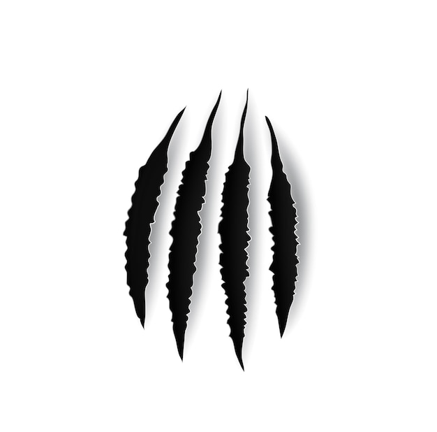 Bear claw marks, scratches, wild animal talon rips, vector holes of predator nails. tiger or cat paws trails, realistic 3d marks of lion, monster, dragon or beast, break traces on white background