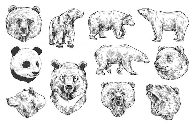 Медведь гризли и панда зарисовки
