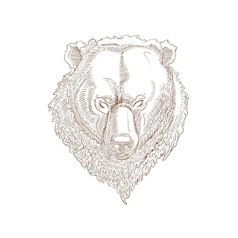 白で隔離のクマのイラスト白で隔離のヒグマの頭手描きのクマのイラスト