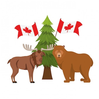 Bear and moose animal of canada
