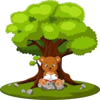 読書の熊と石の上に座って