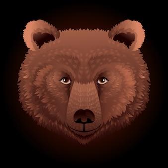 Bear wild animal face.