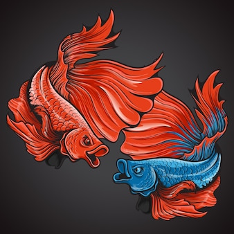 Beautiful action halfmoon betta fish logo illustration