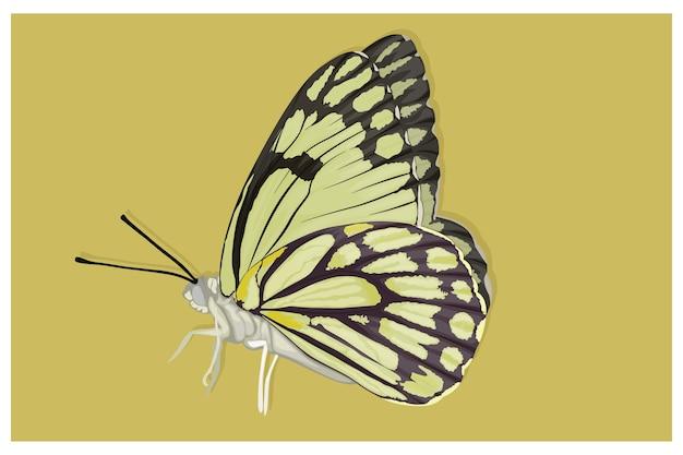 美しいアルビノ蝶のイラスト