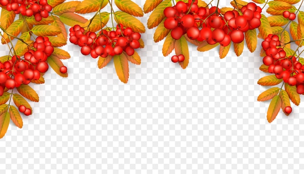 Beautiful background with rowan branch with orange leaves and red ashberry