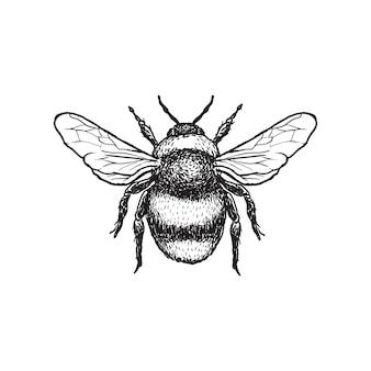 Beautiful bee drawing