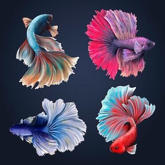 Красивый вектор коллекции рыбы бетта