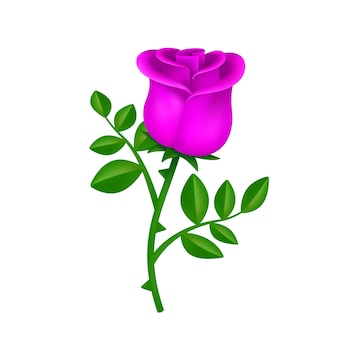 Beautiful blossom pink rose with green leaves isolated on white background