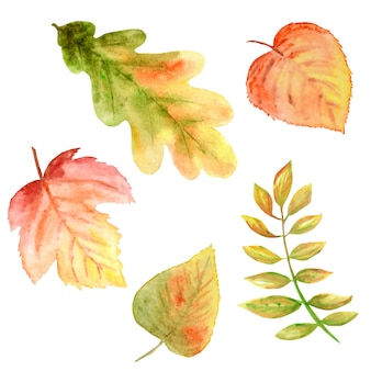 Beautiful bright colors set of autumn leaves.
