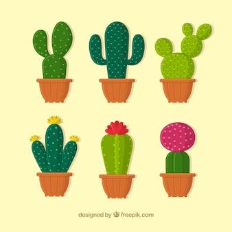 Bella collezione di cactus