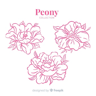 Beautiful collection of hand drawn peony flowers