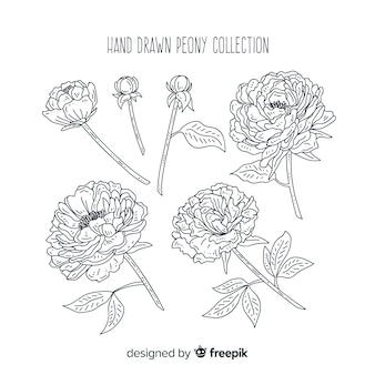 手を描いた牡丹の花の美しいコレクション