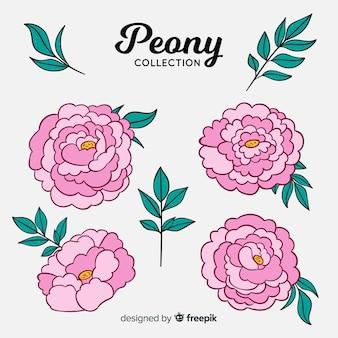 牡丹の花の美しいコレクション